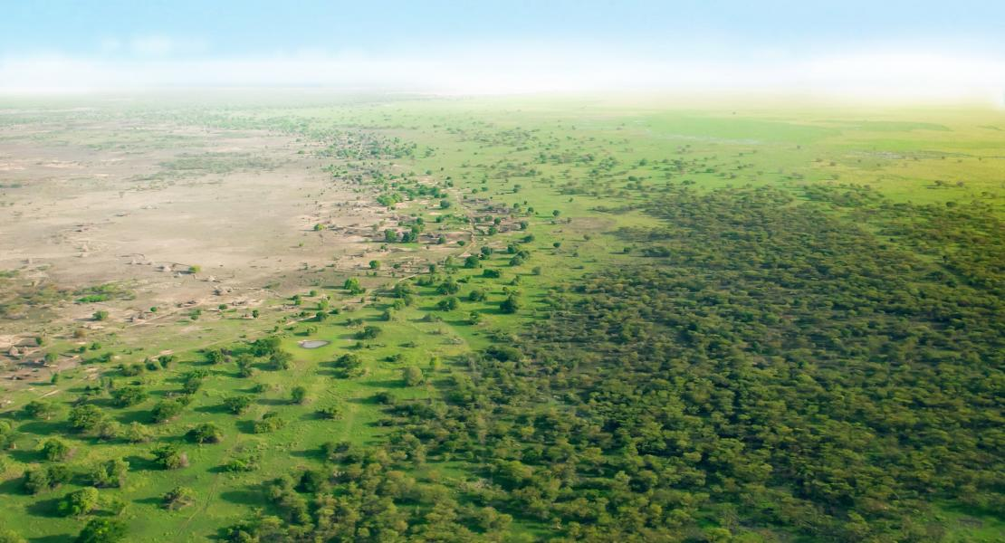The great green wall project